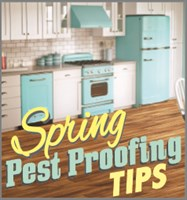 Spring Pest Proofing Kitchen Final