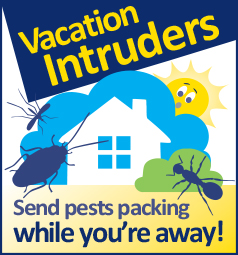 Vacation Intruders Wildcard
